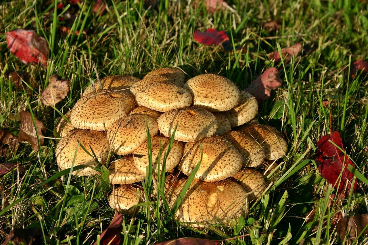 Все грибы подмосковья картинки