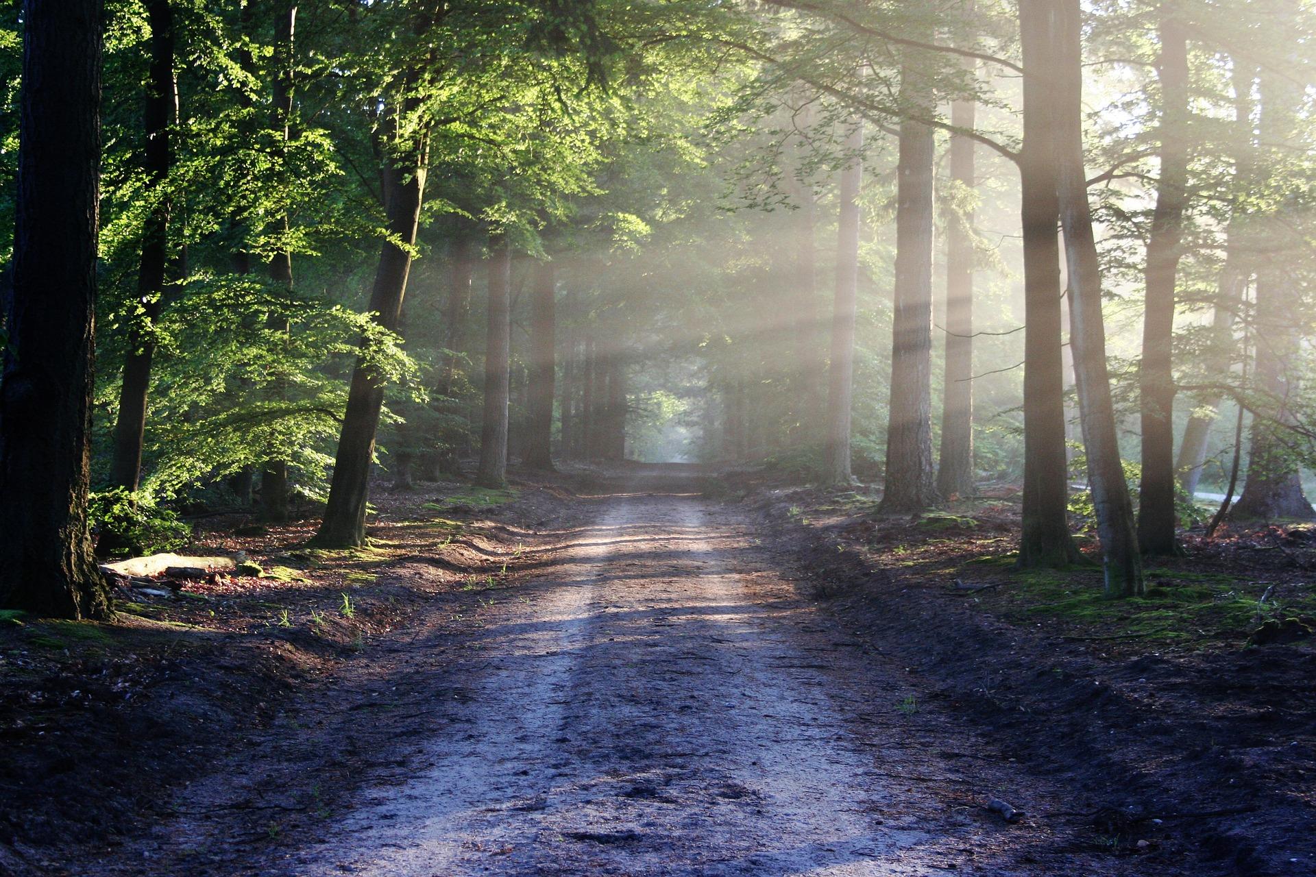 Связанная в лесу 18 фотография