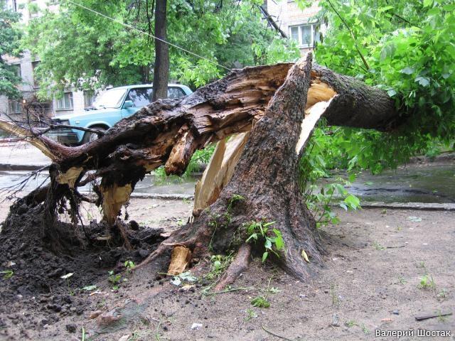 упало дерево дворе и разбилдо ее форум поиск, поставщики магазины