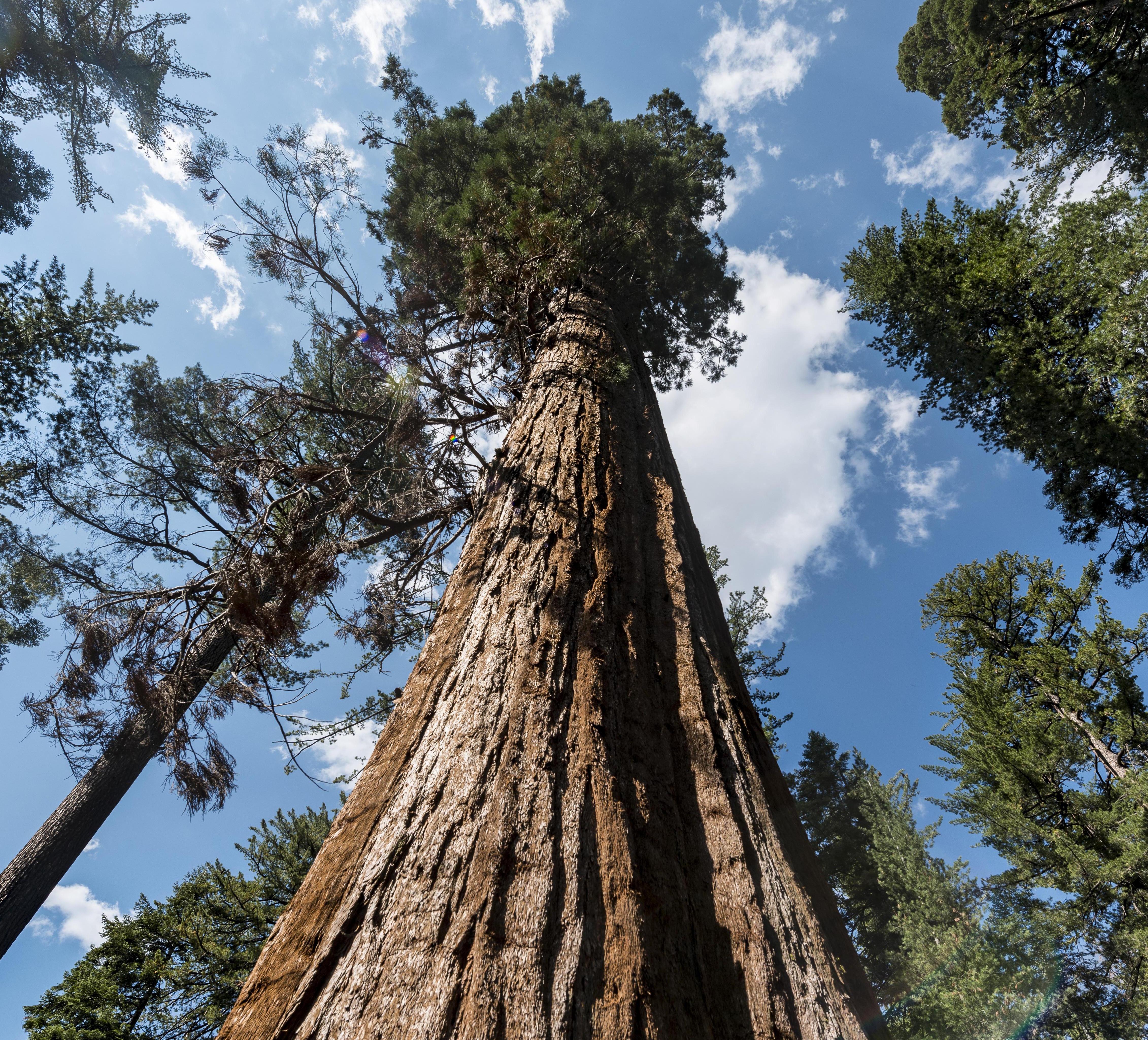 большие деревья фотографии временем так