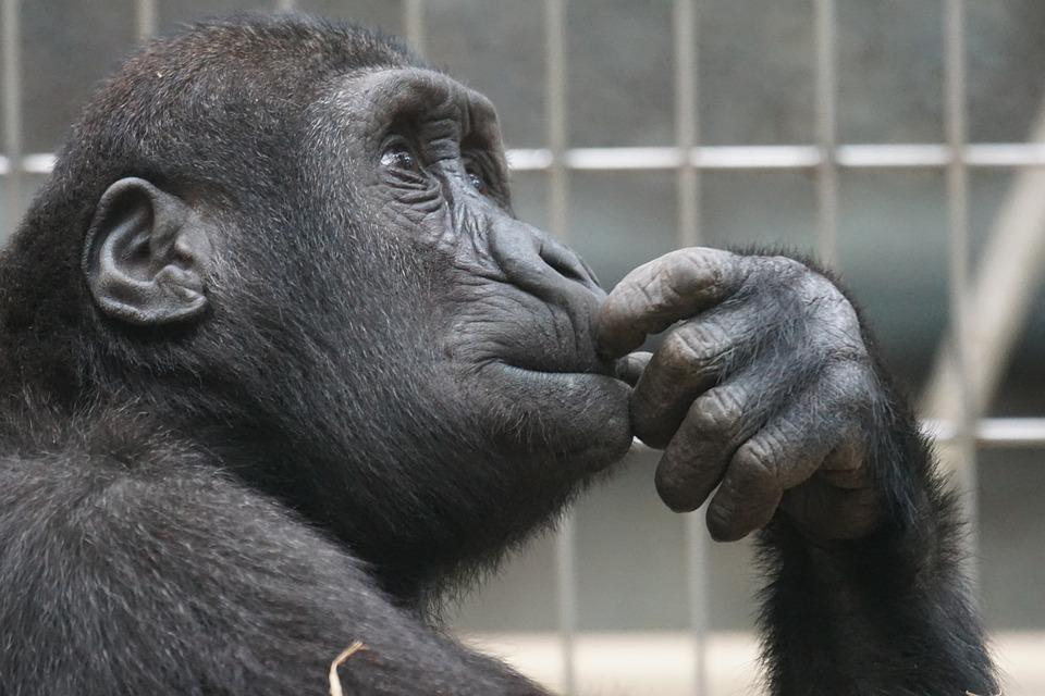 Смешные картинки умных животных