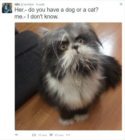 Схожий напса персидский кот озадачил пользователей сети