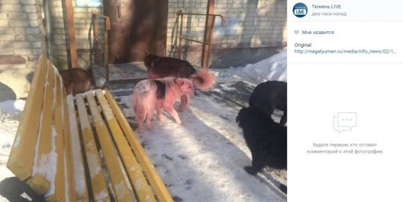 Розовые собаки в Тюмени