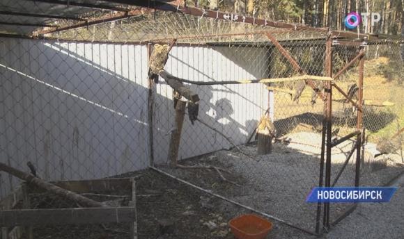 Центр реабилитации хищных птиц собирает средства на обогрев подопечных