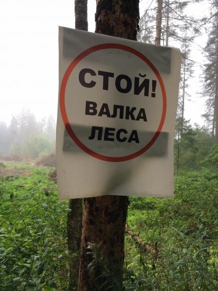 Вырубка леса в Подмосковье