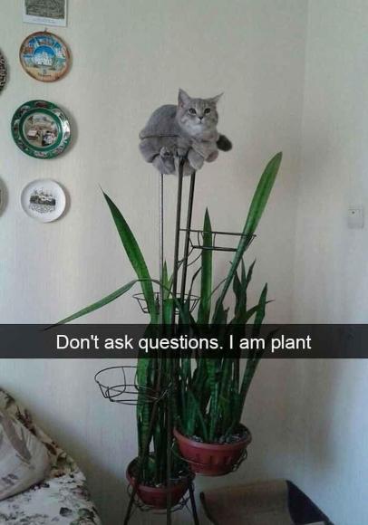 У котиков тоже есть свои слабости
