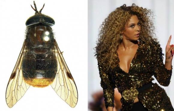 Ученые взяли моду называть вновь открытых насекомых именами знаменитостей