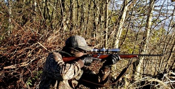 Высокопоставленные охотники поделили почти 6 млн гектаров лесного фонда России