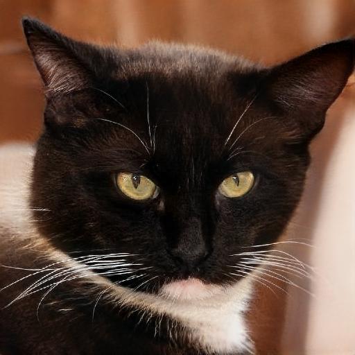 Фейковое фото кота.