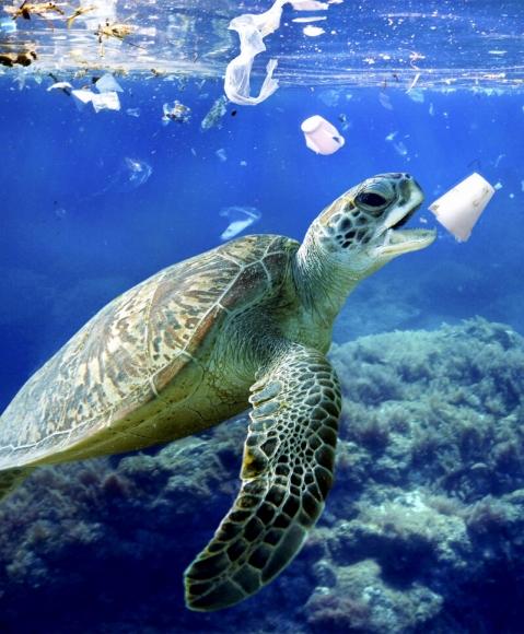 Пластик везде: от кровотока человека до атмосферы