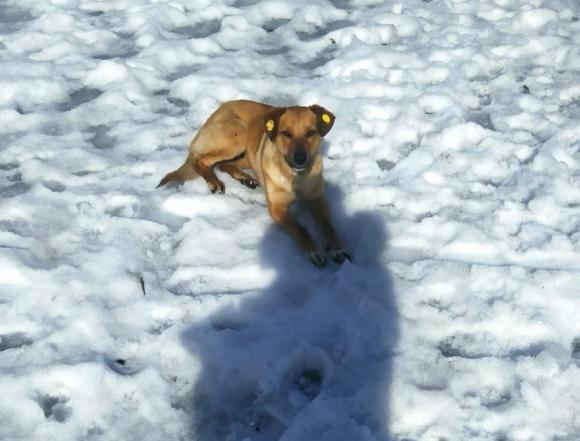 Собачий закон и судьба человека: жизненно важная запятая